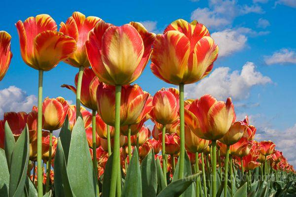 bloemen-0143665847-78D7-63AB-530D-0071C15E1CC3.jpg