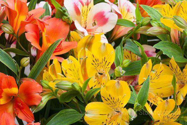 bloemen-05C02707F9-517A-E02C-48B2-D4B339B11BE8.jpg