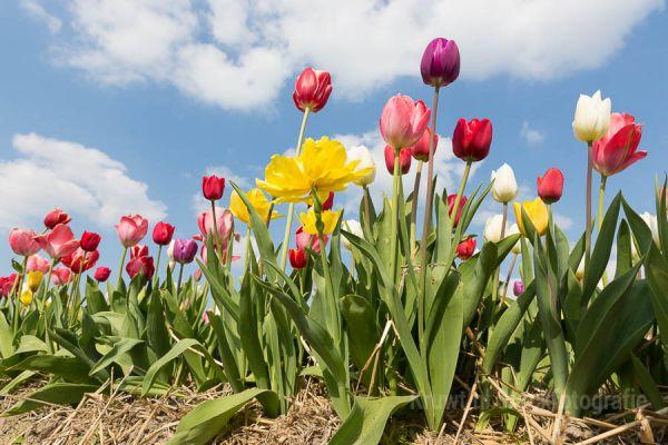 bloemen-07AE215F1F-440C-DB05-9EA6-BDF2464CBC17.jpg