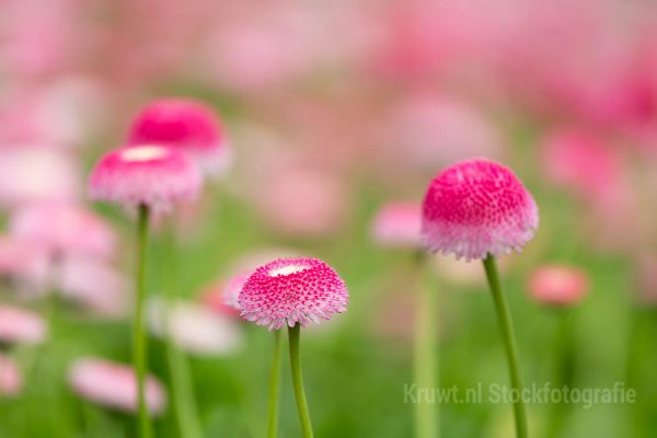 bloemen-128107703E-DDB8-635E-E842-8BA9F8A6C5AB.jpg