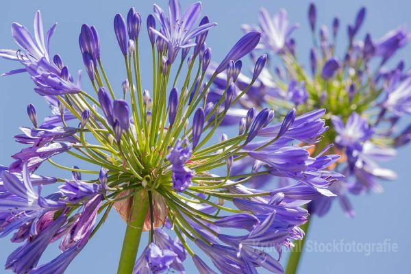 bloemen-149890B025-C048-B1DC-1BE8-60F89AA8BFBF.jpg