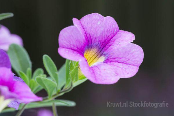 bloemen-192EA77440-8A7C-876F-04DA-E8F37717B6E7.jpg