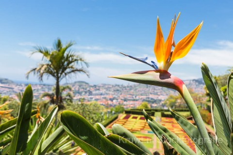 cover-gallery-madeira